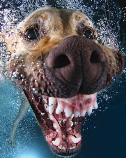 """Фотопроект """"Собаки под водой"""" - №13"""