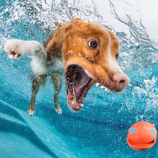 """Фотопроект """"Собаки под водой"""" - №15"""