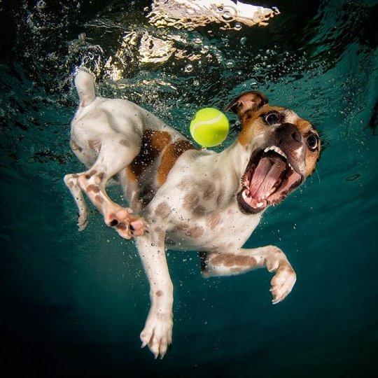"""Фотопроект """"Собаки под водой"""" - №17"""