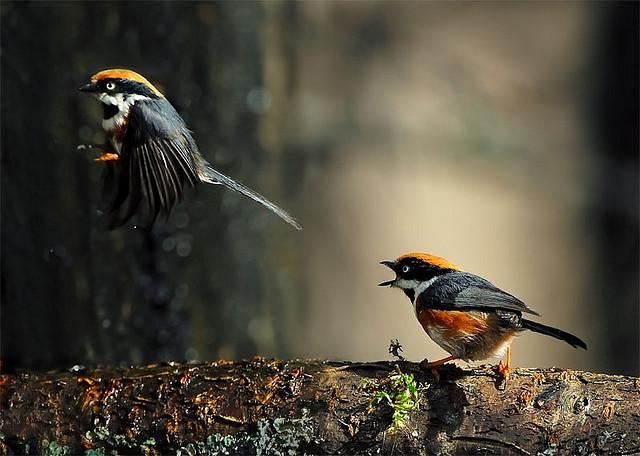 Решающий момент в съемке птиц - №3