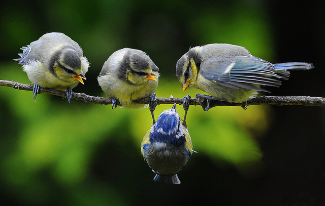 Решающий момент в съемке птиц - №8