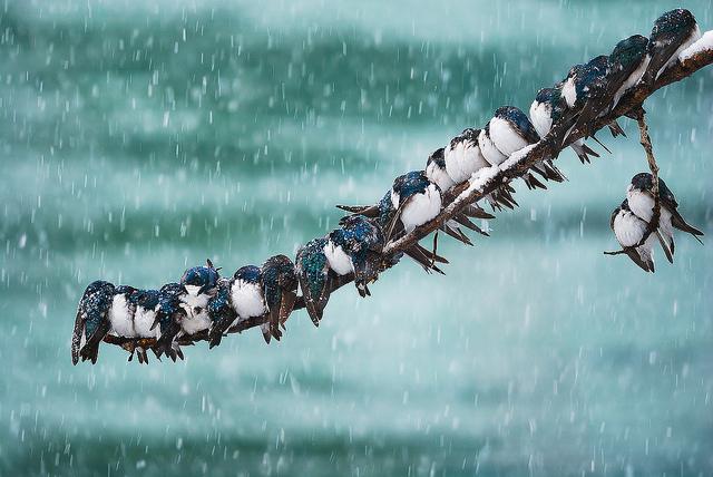 Решающий момент в съемке птиц - №12