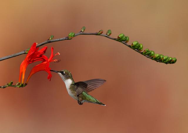 Решающий момент в съемке птиц - №18