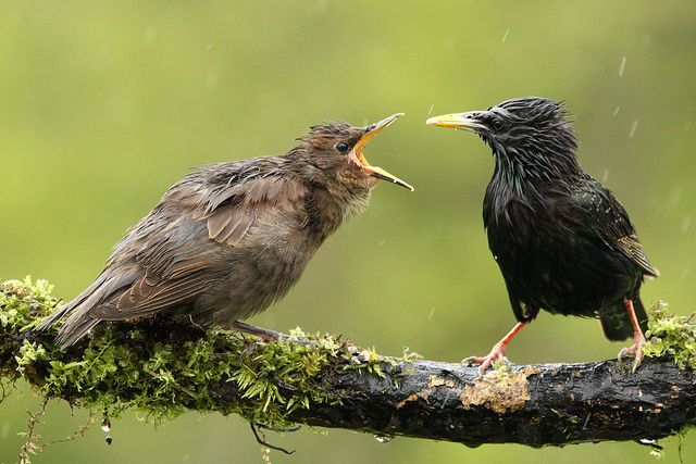 Решающий момент в съемке птиц - №19