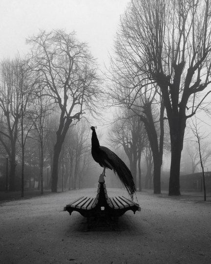 1 место в категории «Животные» Автор фото: Диого Лаге. Снято на iPhone SE