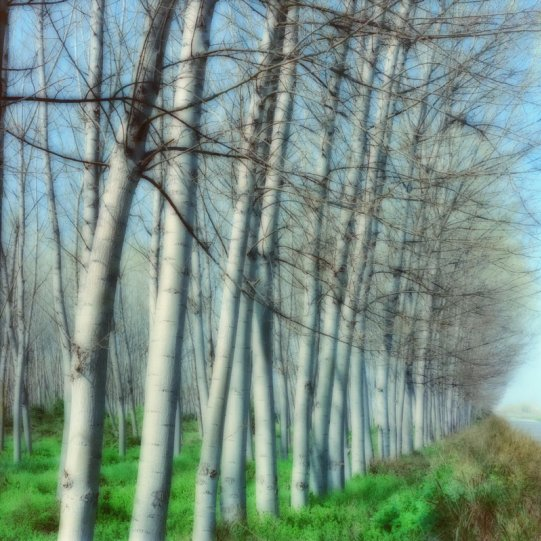 Пейзажи из снов Линн Гизаман - №13