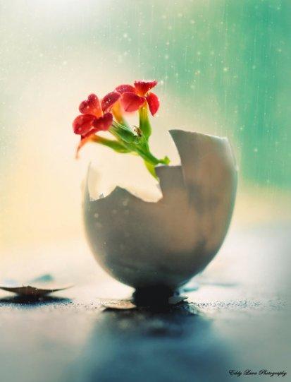 Экстраординарные фотографии цветов - №12