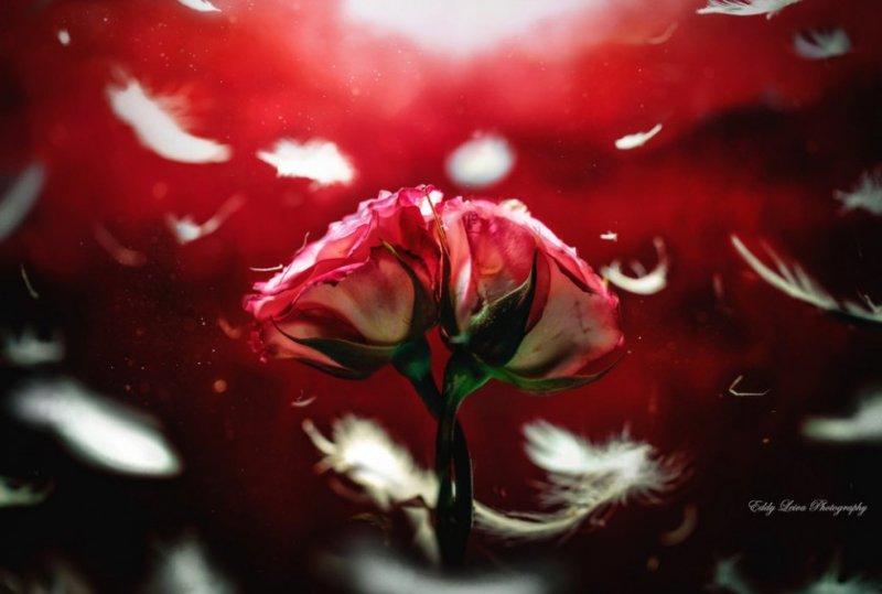 Экстраординарные фотографии цветов - №2