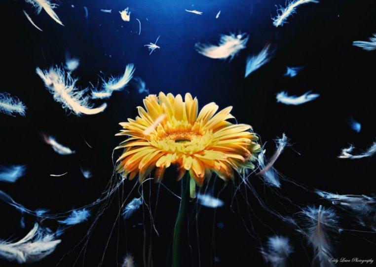 Экстраординарные фотографии цветов - №3