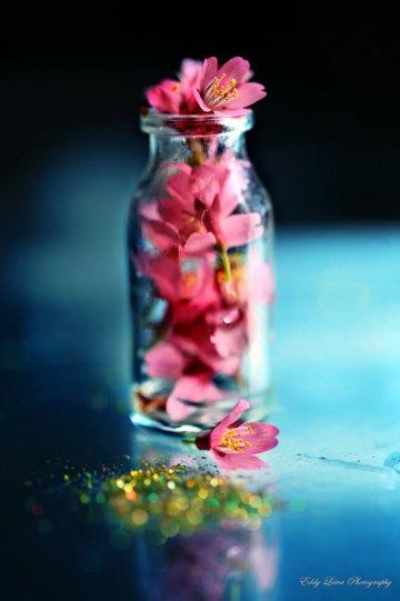 Экстраординарные фотографии цветов - №13