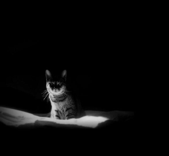 Фото: Драган Джурик