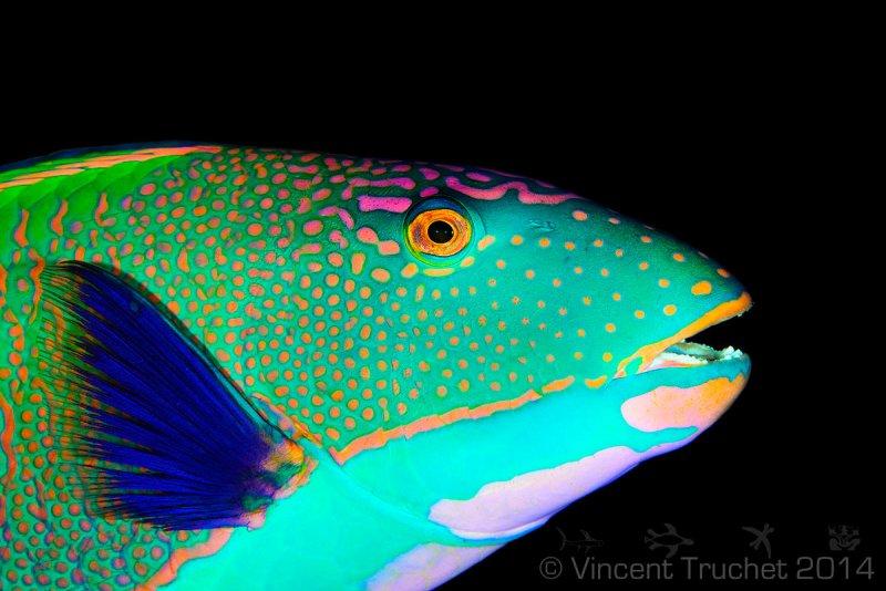 Подводные фотографии Винсента Трюше - №3