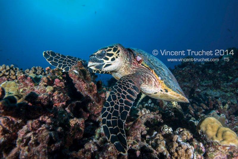 Подводные фотографии Винсента Трюше - №9