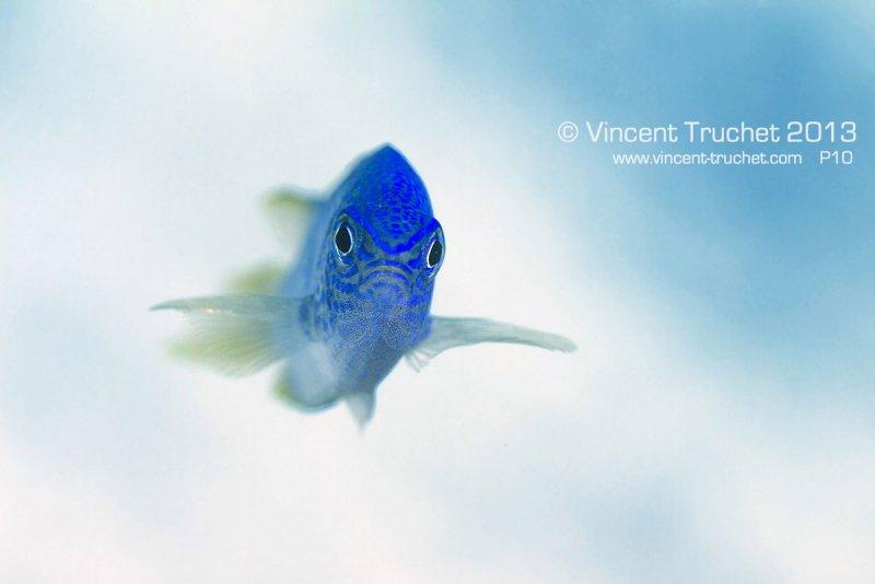 Подводные фотографии Винсента Трюше - №11