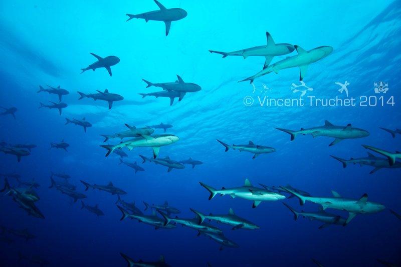 Подводные фотографии Винсента Трюше - №13