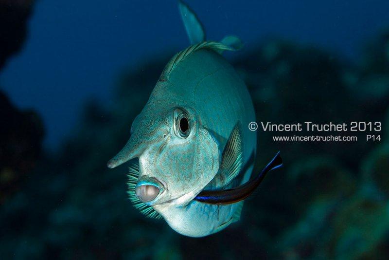 Подводные фотографии Винсента Трюше - №23