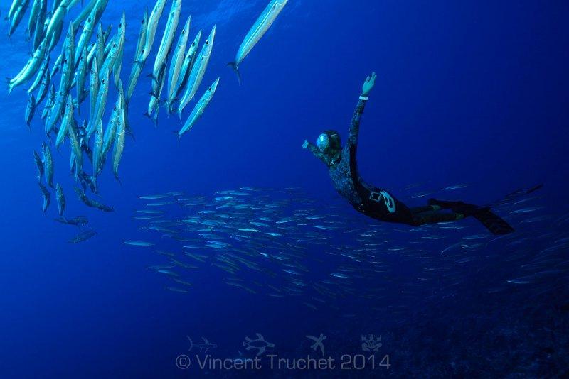 Подводные фотографии Винсента Трюше - №25