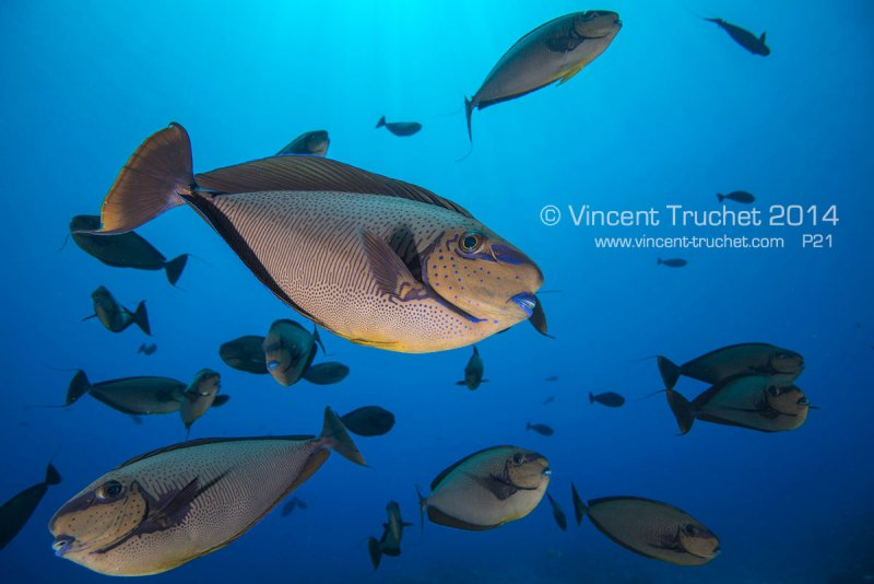 Подводные фотографии Винсента Трюше - №27