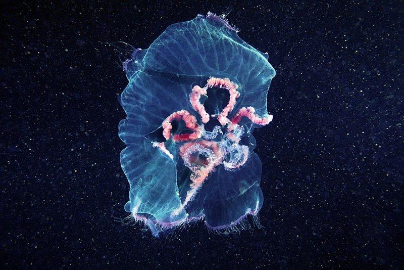 Подводный фотограф Александр Семенов - №12
