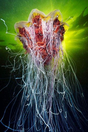 Подводный фотограф Александр Семенов - №19