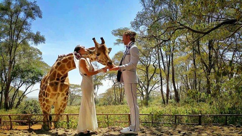 Жираф в Найроби