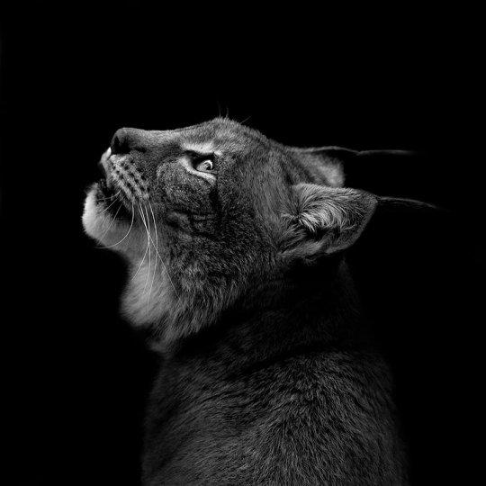 Фотограф Лукас Холас - №12