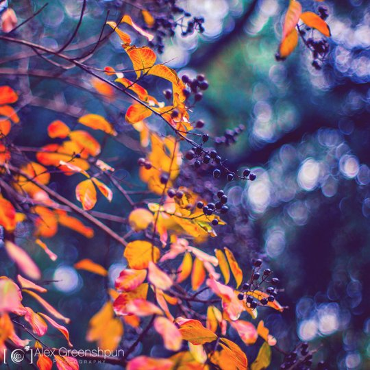 Волшебство осени в фотографиях Александры Гриншпун - №22