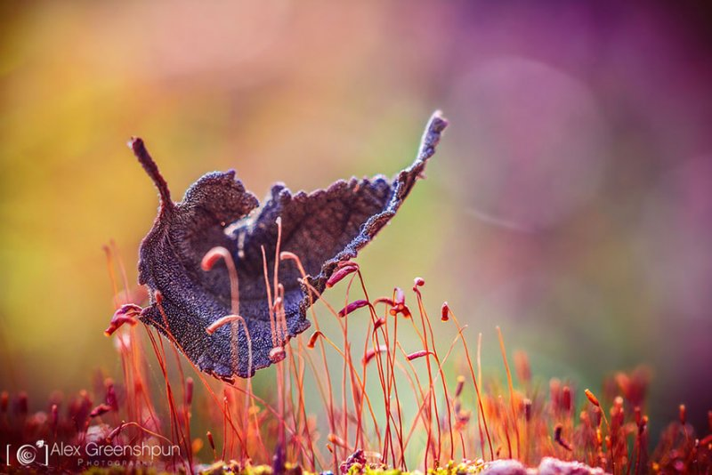 Волшебство осени в фотографиях Александры Гриншпун - №8