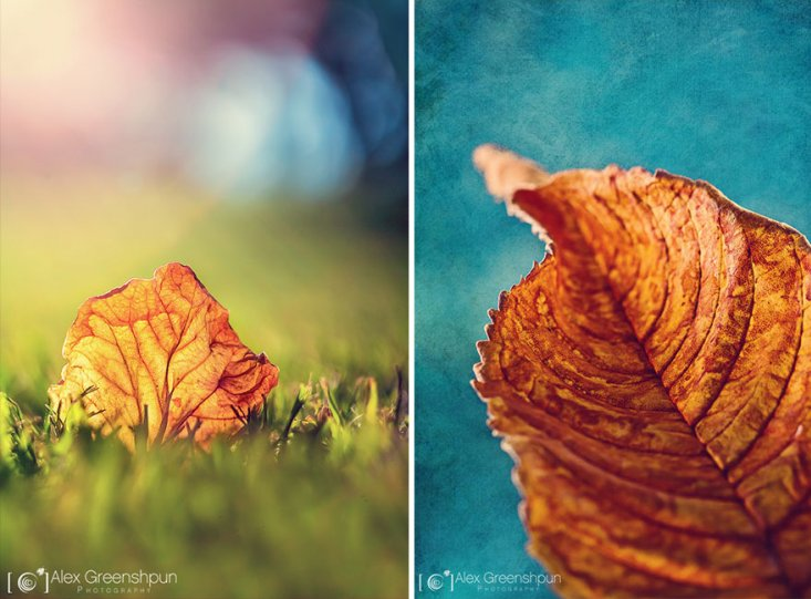 Волшебство осени в фотографиях Александры Гриншпун - №20