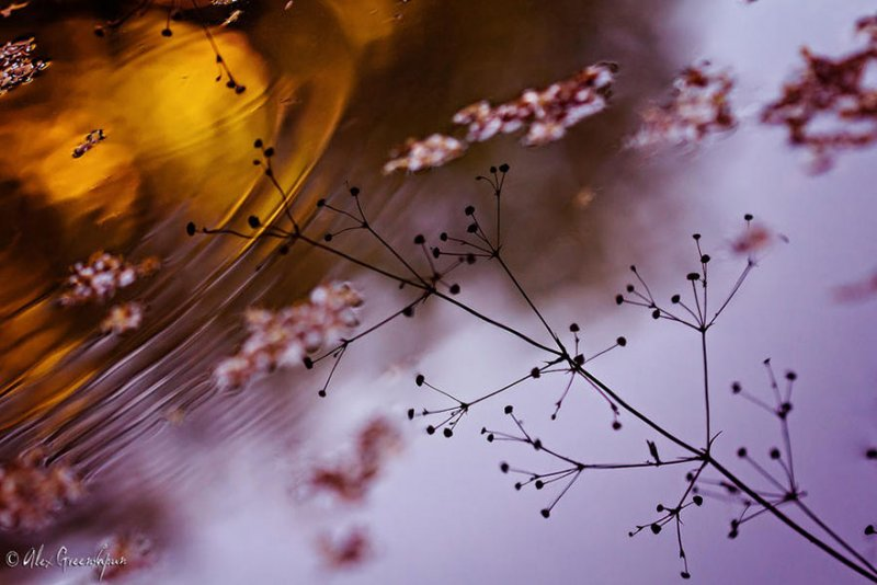 Волшебство осени в фотографиях Александры Гриншпун - №14