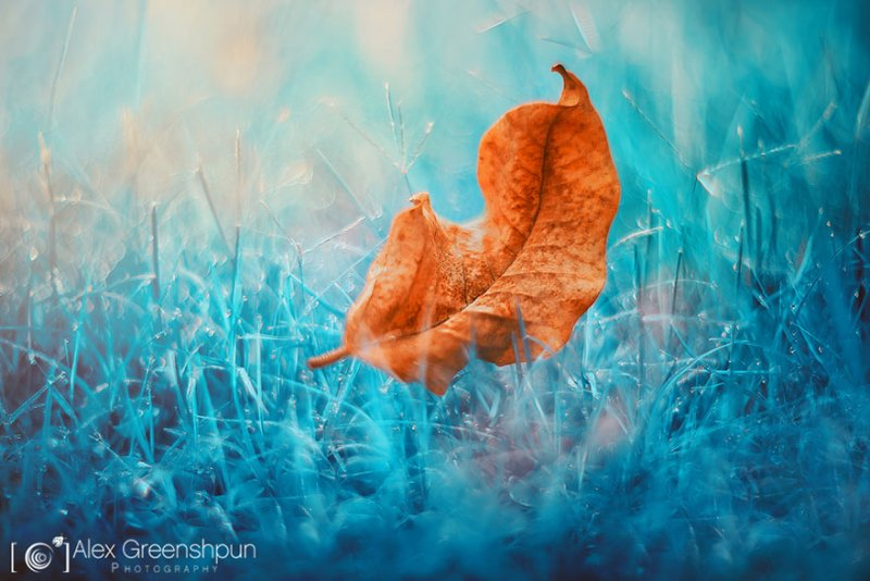 Волшебство осени в фотографиях Александры Гриншпун - №16