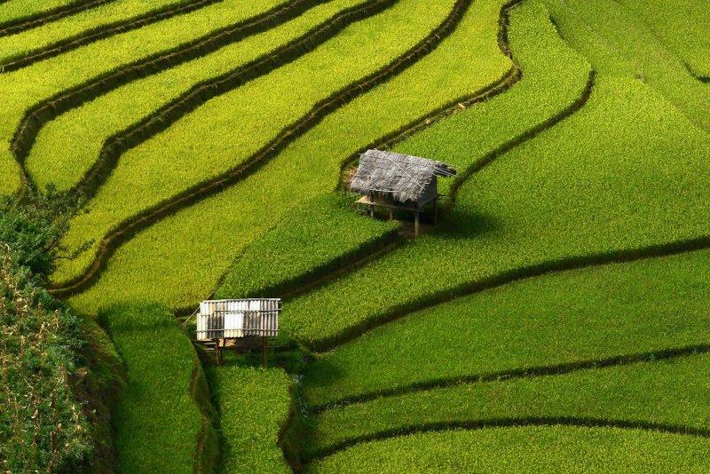 Великолепные рисовые террасы Вьетнама - №4