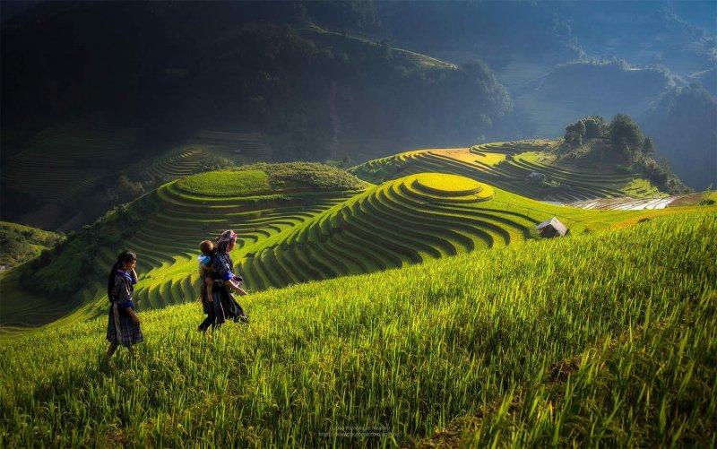 Великолепные рисовые террасы Вьетнама - №10