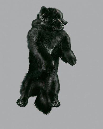 Фотографии собак в прыжке от Джулии Кристе - №5