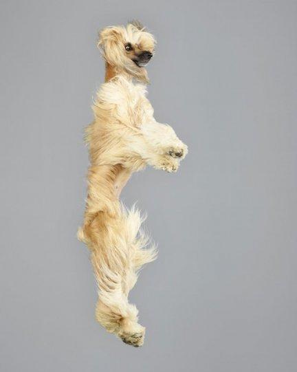 Фотографии собак в прыжке от Джулии Кристе - №9