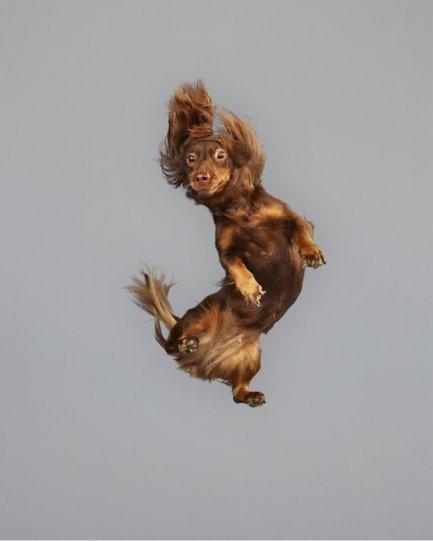 Фотографии собак в прыжке от Джулии Кристе - №11