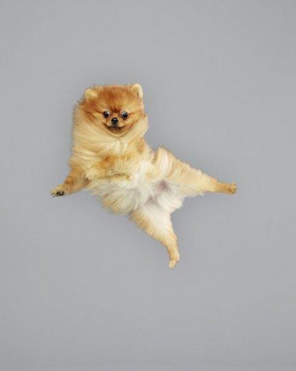 Фотографии собак в прыжке от Джулии Кристе - №17