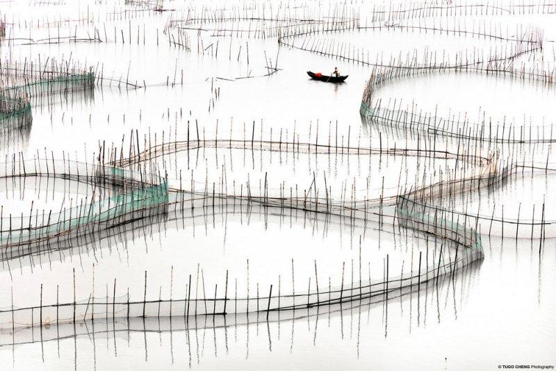 Туго Ченг  «Прибрежная геометрия» - №7