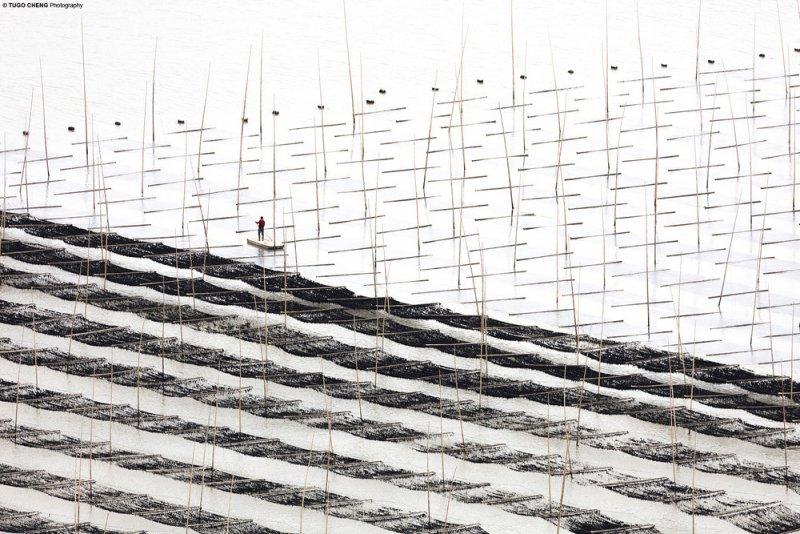 Туго Ченг  «Прибрежная геометрия» - №9