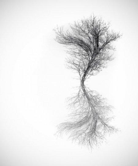 Симметрия и минимализм в фотографиях Адриенн Баласко - №10