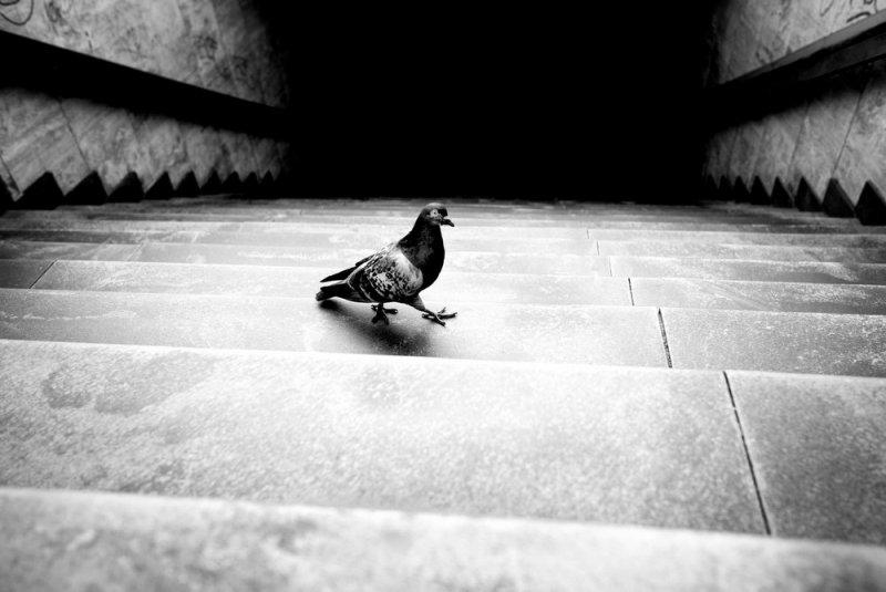 Уличный фотограф и журналист Алан Шаллер - №3