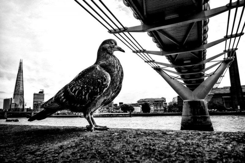 Уличный фотограф и журналист Алан Шаллер - №5