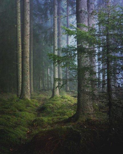 Лесная сказка от фотографа Hilde Engerbrаten - №6
