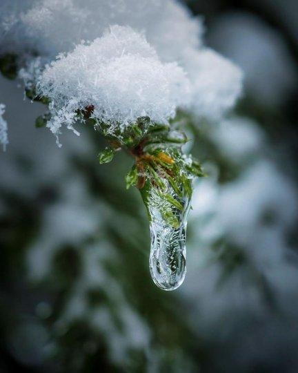 Лесная сказка от фотографа Hilde Engerbrаten - №12