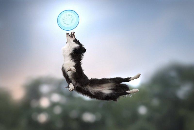 Собаки в фотографиях Клаудио Пикколи - №4