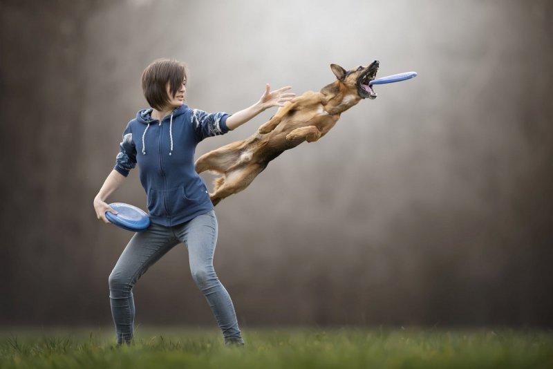 Собаки в фотографиях Клаудио Пикколи - №8