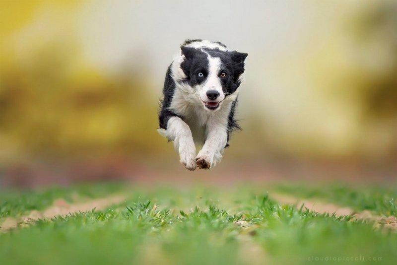 Собаки в фотографиях Клаудио Пикколи - №12