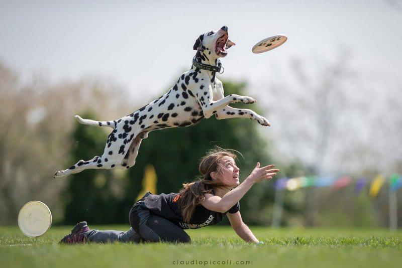 Собаки в фотографиях Клаудио Пикколи - №18