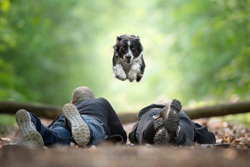Собаки в фотографиях Клаудио Пикколи - №25