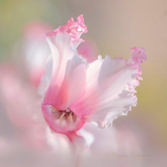 Цветы - главные герои кадра - №14